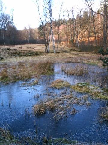 """Hochmoor """"Rotes Wasser"""" oder Olfener Moor"""