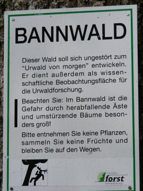 Tafel Bannwald: zukünftiger Urwald
