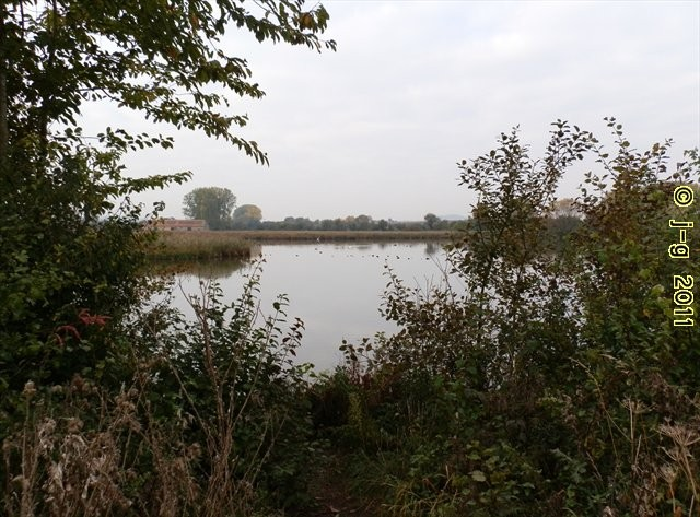 im NSG Reinheimer Teich