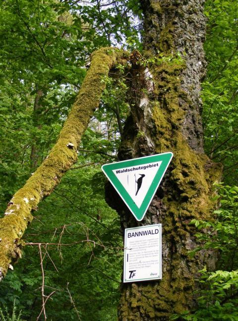 """Waldschutzgebiet """"Bannwald"""""""