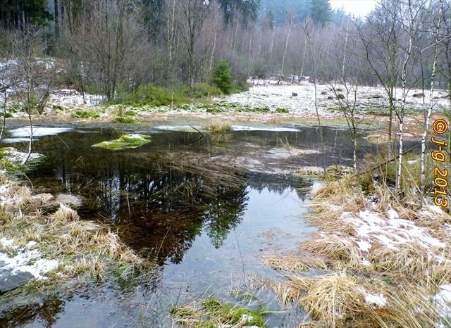 Das Moor im Winter