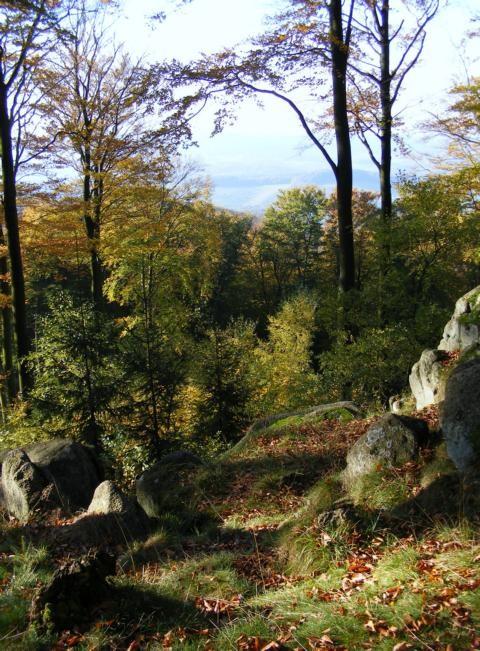 Blick von der Tromm ins Tal