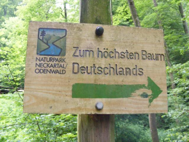 """Hinweisschild """"Zum höchsten Baum Deutschlands"""""""