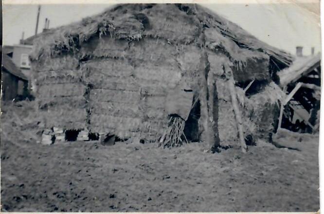 Noodkoeienstal na brand 1949