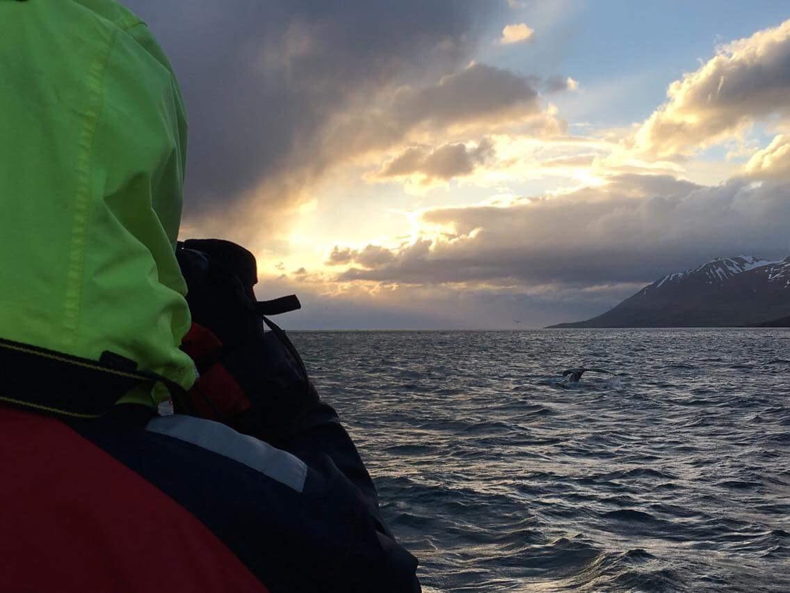 Beim Whale Watching