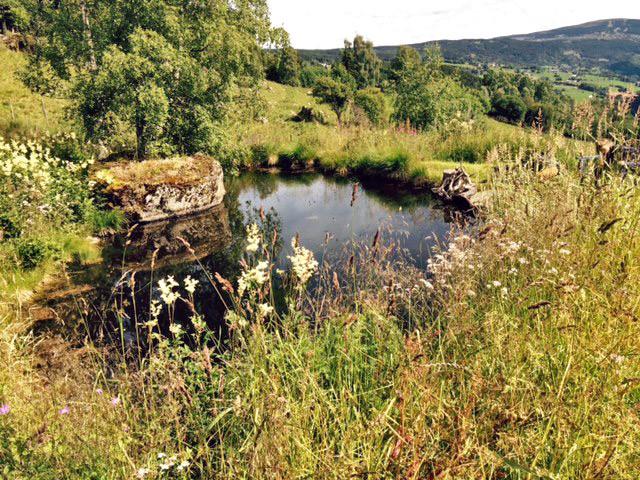 Der Teich, an dem sie Mariel trafen