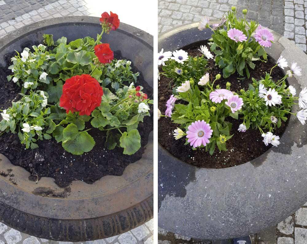 Blumenkübel auf dem Innenhof - frisch eingepflanzt und gegossen