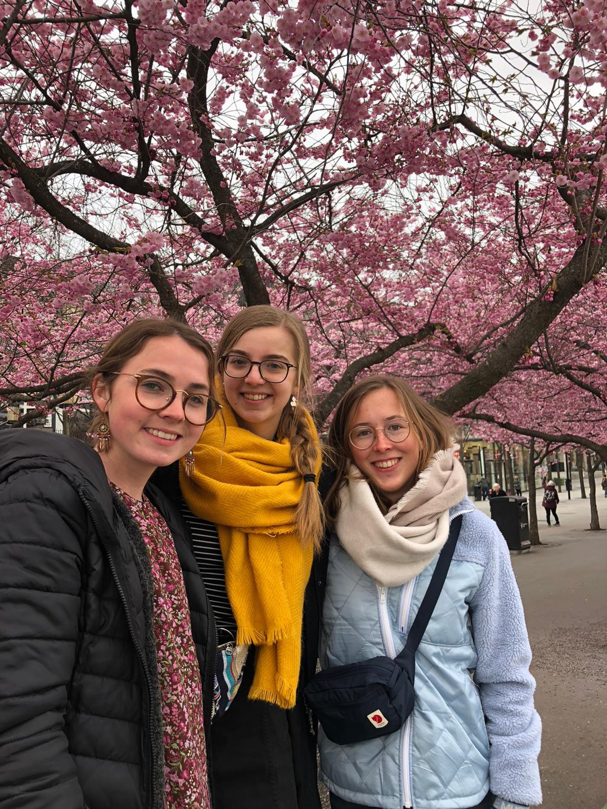 Clarita, Julia und Hannah vor den blühenden Kirschbäumen in Stockholm