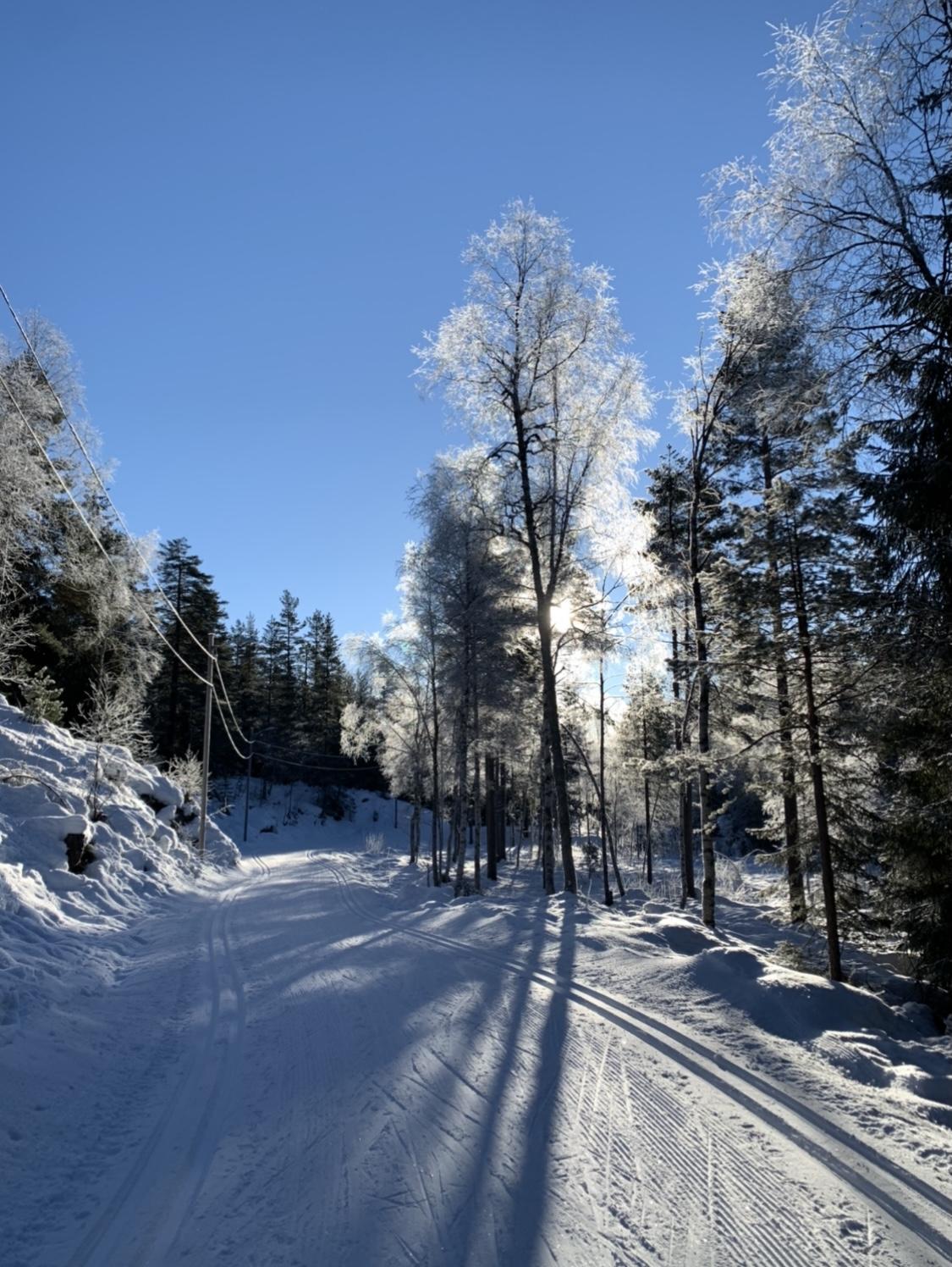 Durch den verschneiten Wald in Norwegen