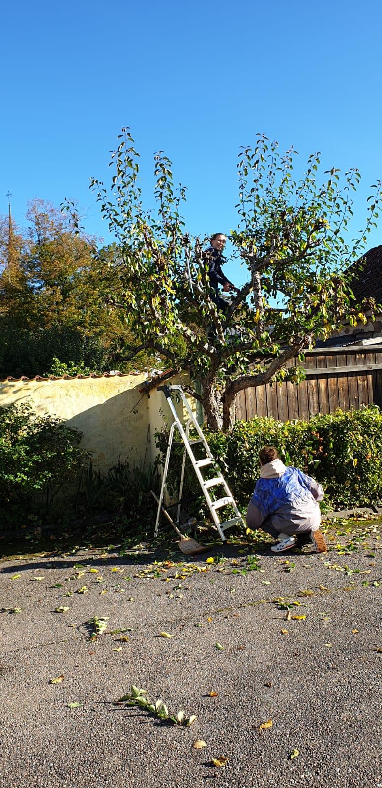 Johanna und Hannah beim Bäumeschneiden in Vadstena