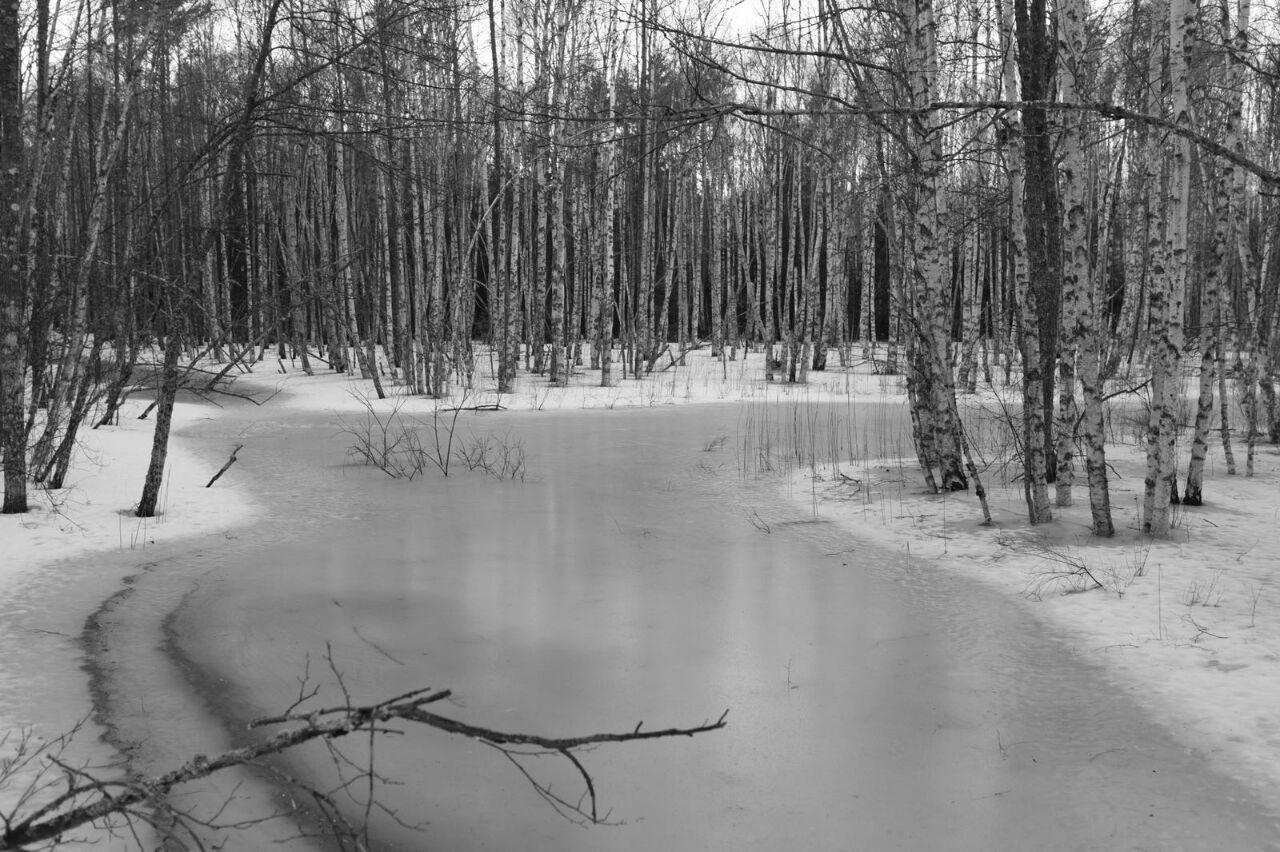 Winterlandschaft in Schweden