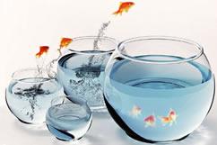 diversity.fish - Kursangebot