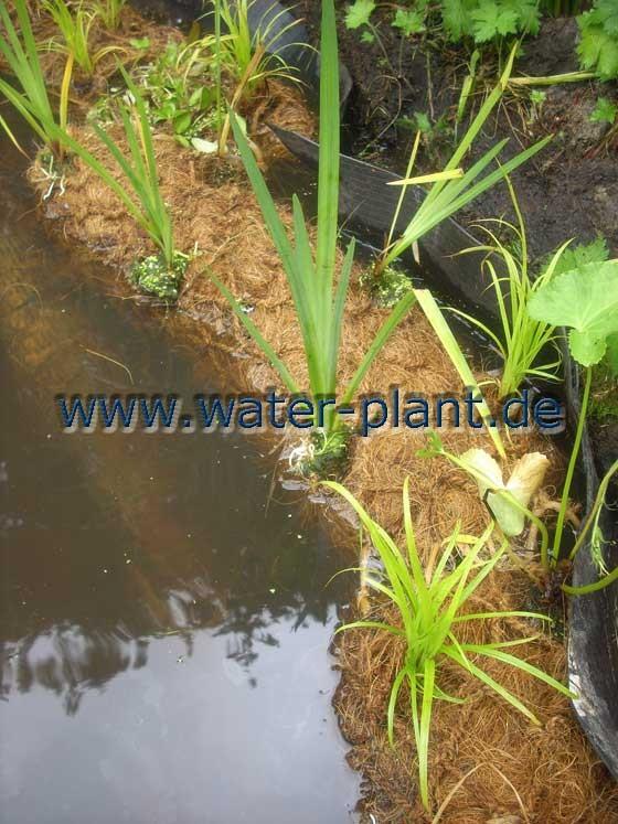 Teichufer mit bepflanzten Pflanzrollen