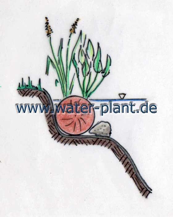 Pflanzrolle mit Bepflanzung (20 cm Durchmesser)