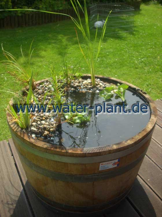 miniteichset mit pflanzen water plant. Black Bedroom Furniture Sets. Home Design Ideas