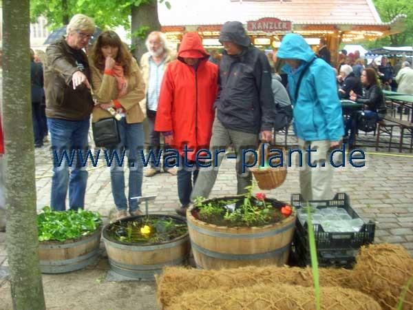 Norder Rosenmarkt