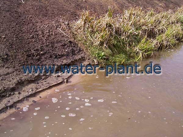 Röhrichtmatten schützen das Ufer vor einsetzender Erosion
