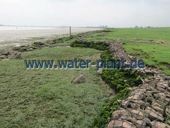 Die Steinwalzen schützen die Abbruchkante vor Erosion