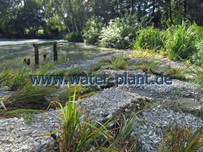 Uferbereich vor Anheben des Wasserspiegels