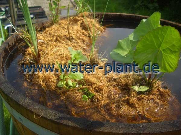 Pflanzrolle aus Kokosfaser mit Teichpflanzen in einem Miniteich