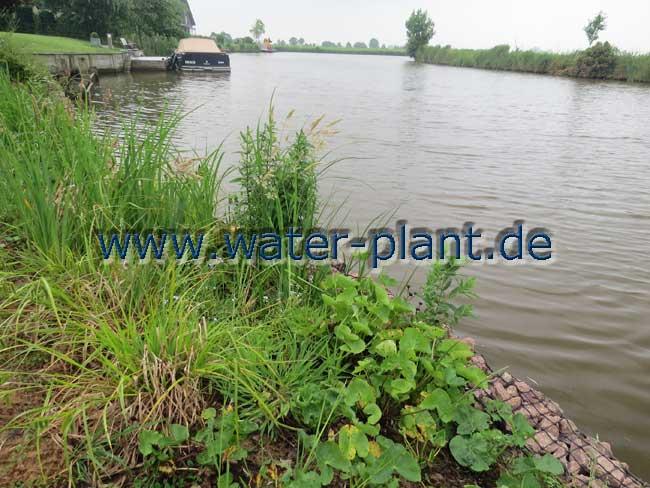 Eine optisch ansprechende und ökologisch hochwertige Uferbefestigung