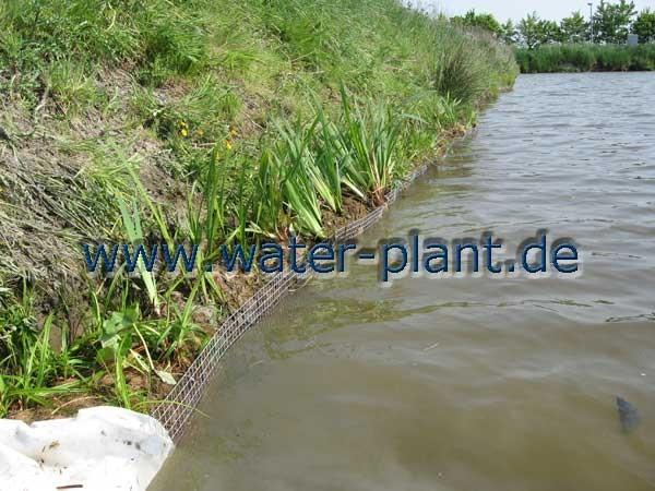 neues Ufer mit Bisamgitter und Röhrichtwalze