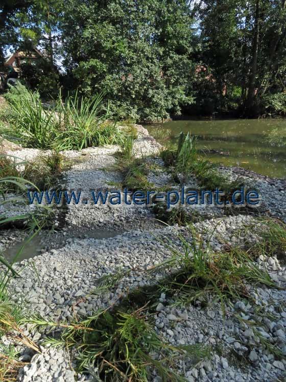 die Uferzone bietet unterschiedliche Strukturen