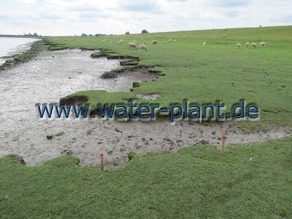 Uferabschnitt vor den Bauarbeiten