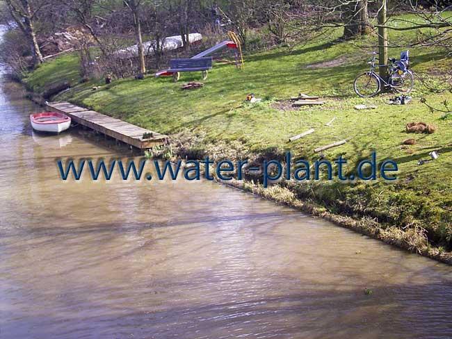 bisamsicheres Ufer mit Röhrichtwalzen