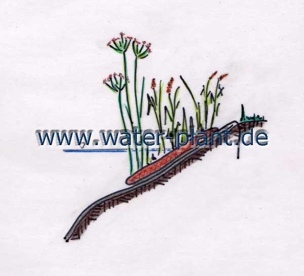 mit Pflanzmatten (0,5 m oder 1,0 m breit) steile Ufer dauerhaft bepflanzen