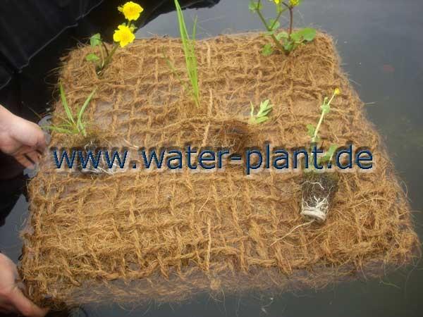 Bepflanzung einer Schwimm - Insel mit Röhricht - Topfballen