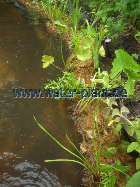 begrünte Pflanzrollen machen aus einem nackten Teichrand ein attraktives Ufer