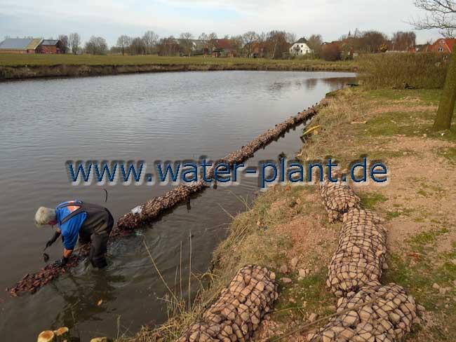 Steinwalzen werden als Uferbefestigung eingebaut