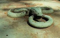 Falsche Schlangen und Königliche Tiere