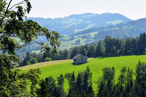 Panorama vom Baumwipfelpfad Nerckertal, in Mogelsberg