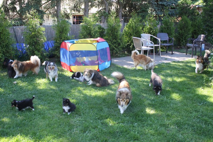In diesem Sommer haben wir eine schöne Welpenzeit mit vielen Besuchern und Gasthunden bei bestem Wetter verleben können.