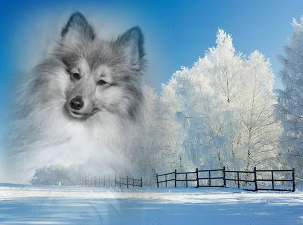 Winterträume mti Hoyax