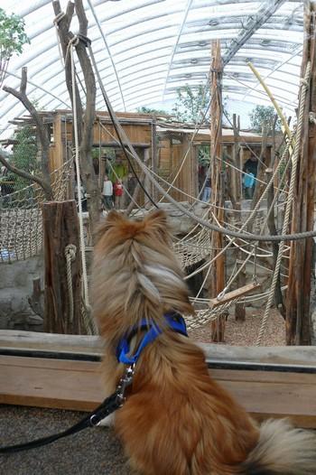 Ich machte Bekanntschaft mit einem Bären, der mir einen Nasenstupser geben wollte. Affen, die mir die Pfote reichen wollten und ich musste mit über eine Hängebrücke gehen, puh.