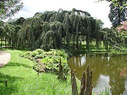 Arboretum de la Vallée aux Loups, à Châtenay-Malabry