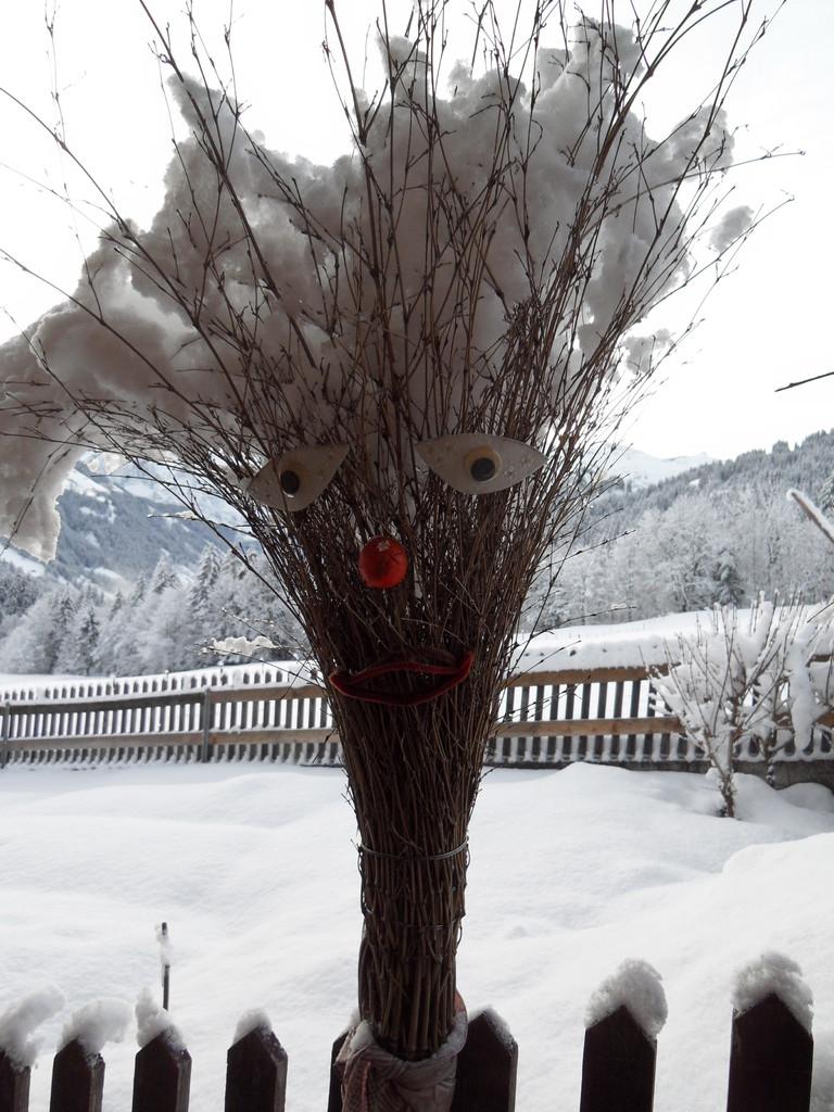 Einheimischer Winterbesen