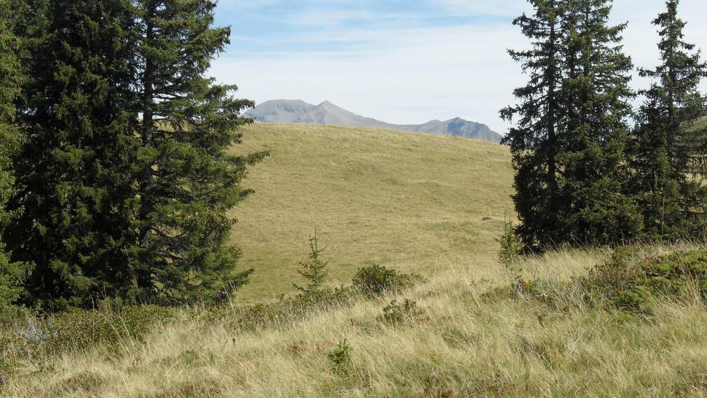 Haslerberg, im Hintergrund Albristhorn
