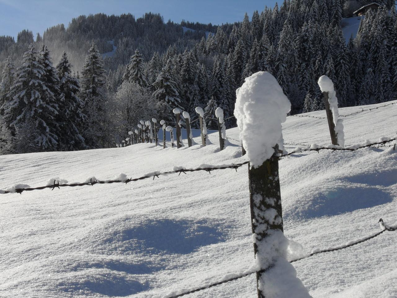 Winter, 19. Dezember 2012
