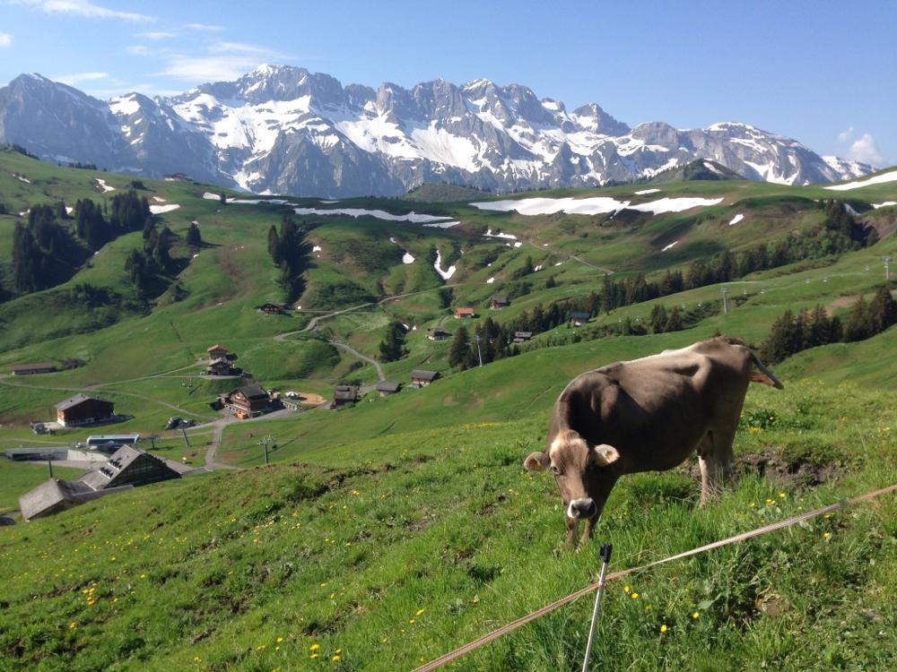 Nous certifions qu'aucun animal n'a été blessé pendant cette randonnée.