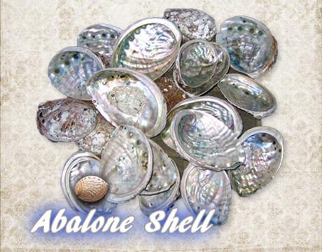 アワビ貝殻