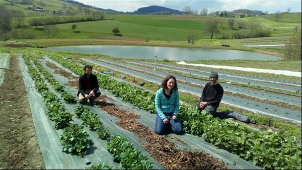 Récolte de légumes bio à La Ferme La Brabinette