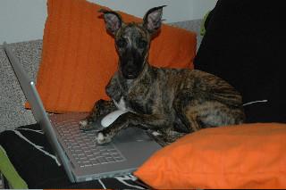 ... und das ist Sourie - die zwischendurch mal am PC arbeitet ;-)