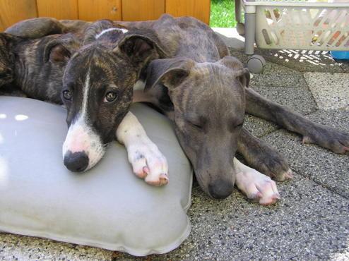 Asmara (jetzt Chili) und Amos