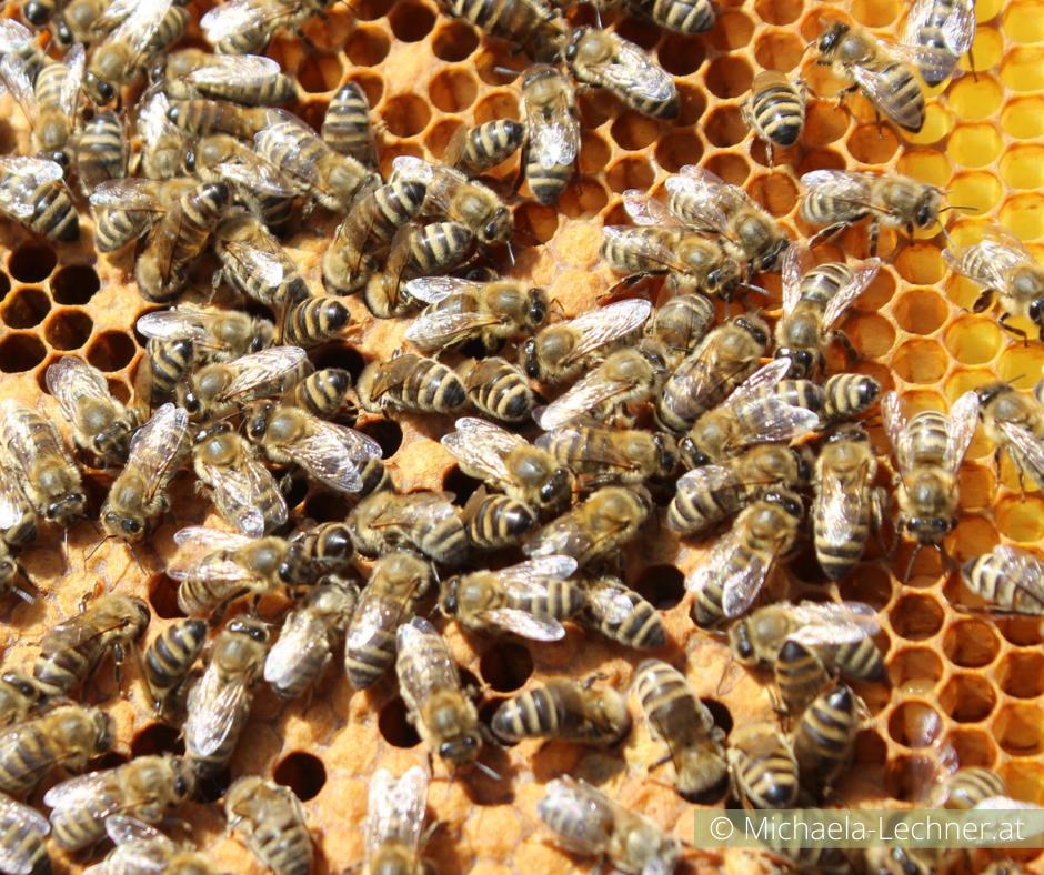 BEE careful: Nachricht vom Bienenvolk