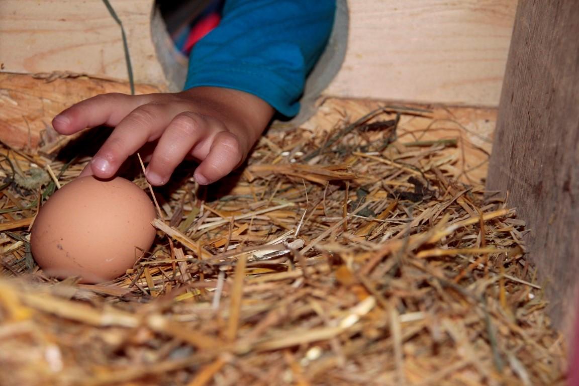 Upps - da ist ja ein frisches Ei