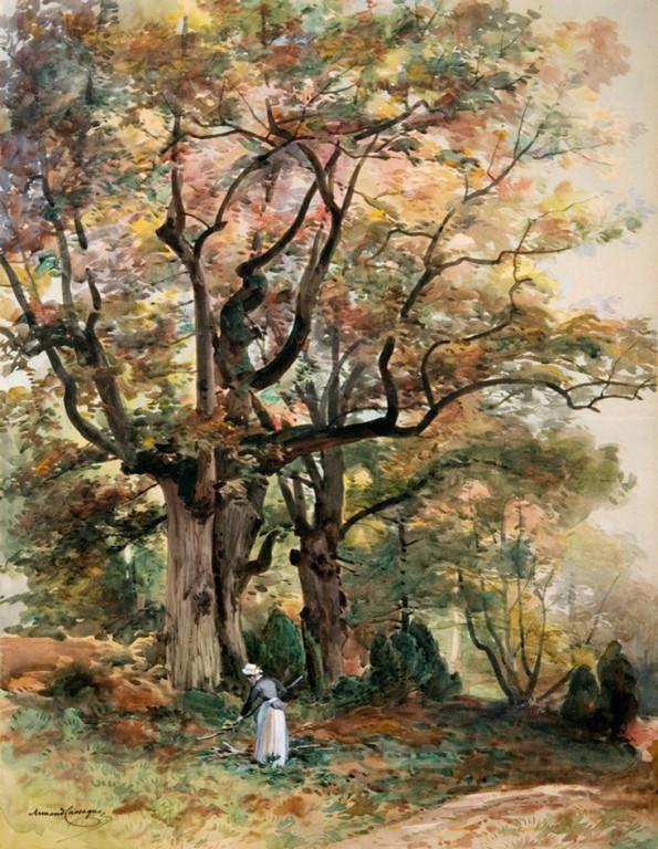 Armand Cassagne inv 313.  Le Vallon des peintres. Etude d'un chêne géant - Aquarelle
